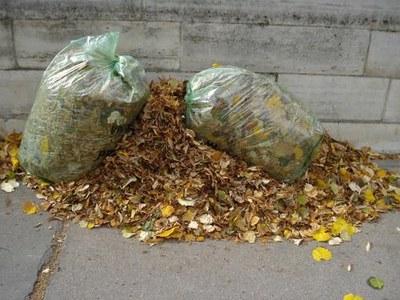feuilles mortes et sac plastique