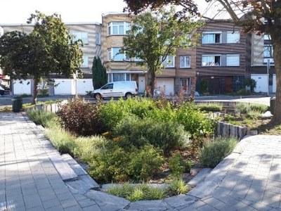 eau   jardin de pluie rue Lumière